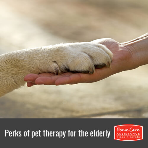 Top Benefits of Pet Therapy for the Elderly in Anchorage, AK